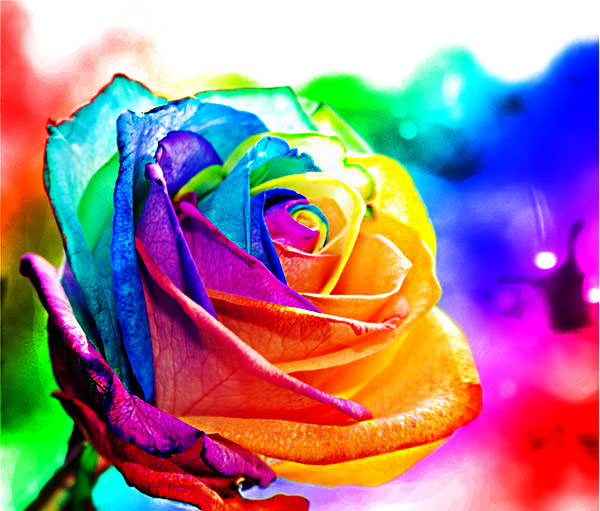 Rainbow rose by d3adjfr33man on deviantart for What are rainbow roses