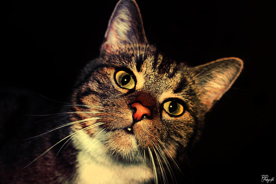 My cat crumb by PPFotografie