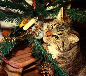 Christmas Cat by PPFotografie