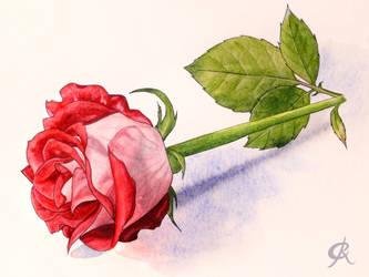 Mothersday Rose by Juhani