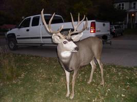 Deer Stock 4 by VampsStock