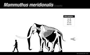 Southern mammoth by Asier-Larramendi