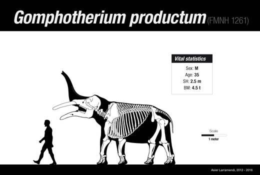 Gomphotherium productum skeletal