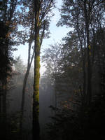 Mist in Forest Park by ThinkingInAngles