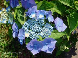 Soft purple petals by im1happy