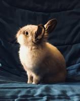 lovely bunny by hazelgirl10