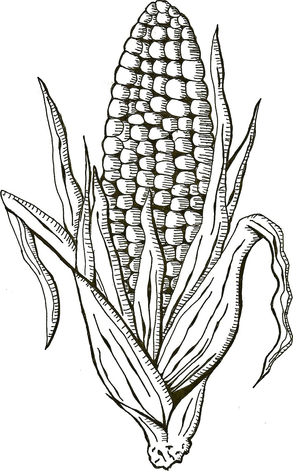 Corn by Sketch--Addict on DeviantArt