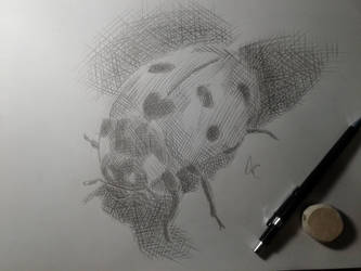 Hachura/Hatching - Joaninha/Ladybug