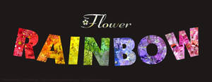 Flower Rainbow II