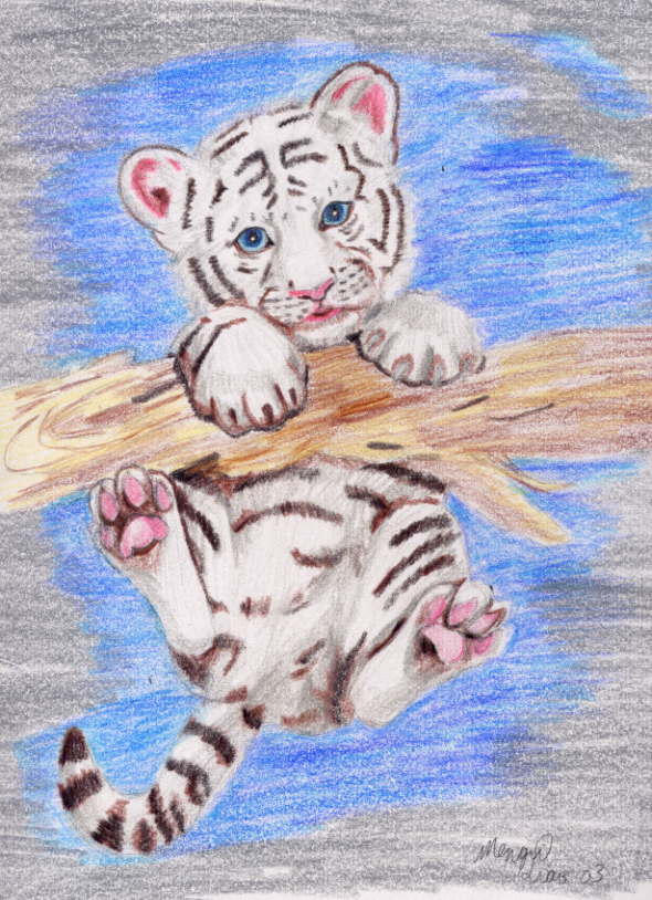 How To Draw A White Tiger Step by Step Drawing Guide by