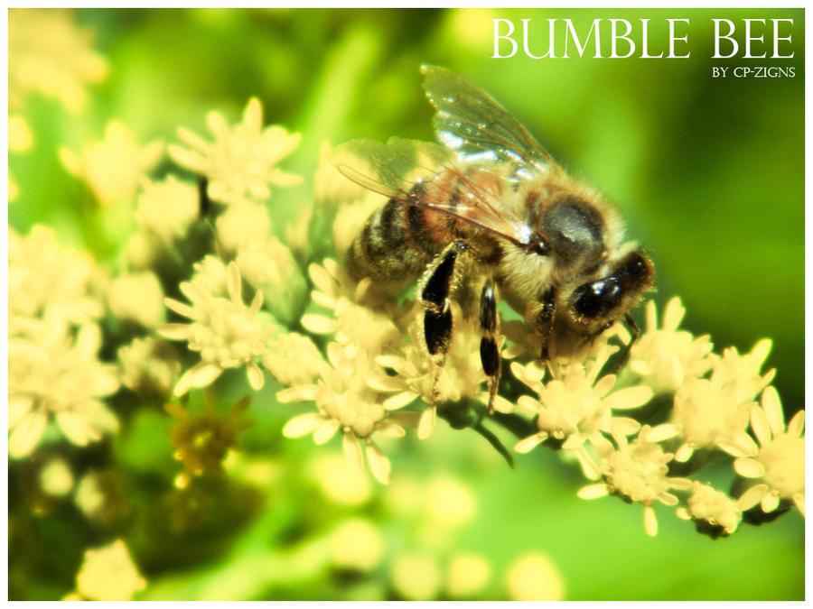 -bumble.bee-
