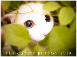 -the.cutest.button.ever-
