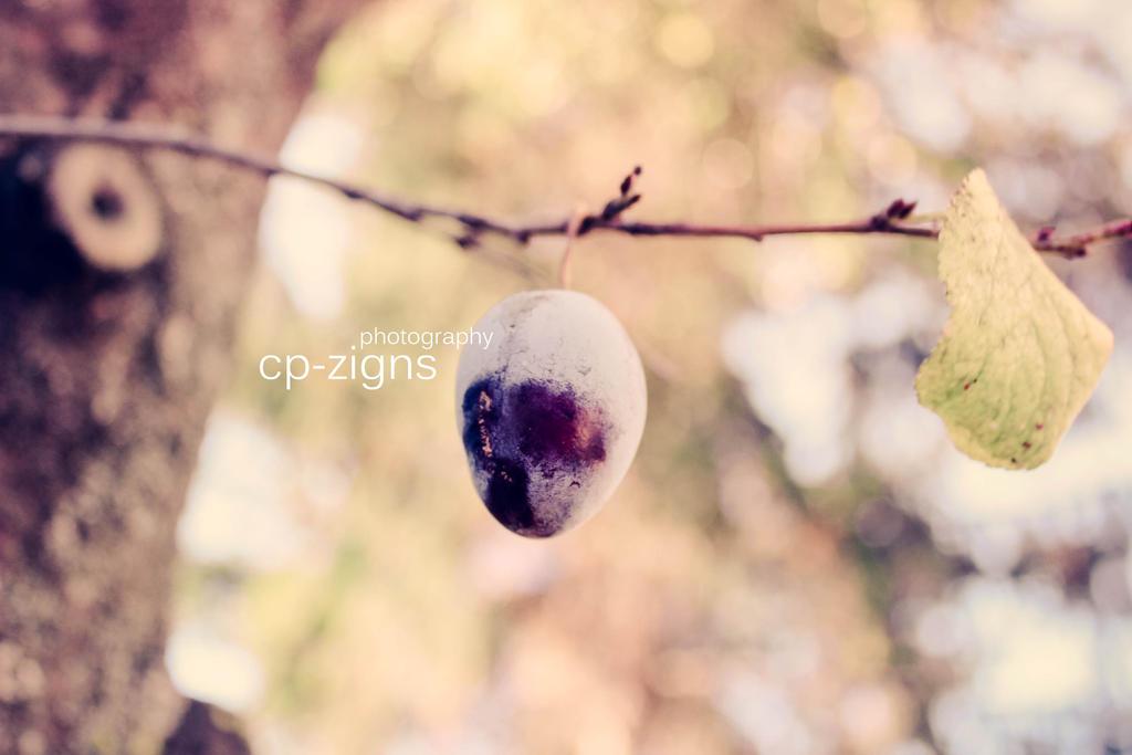 -fruity.one-