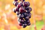 -natural.grapes-