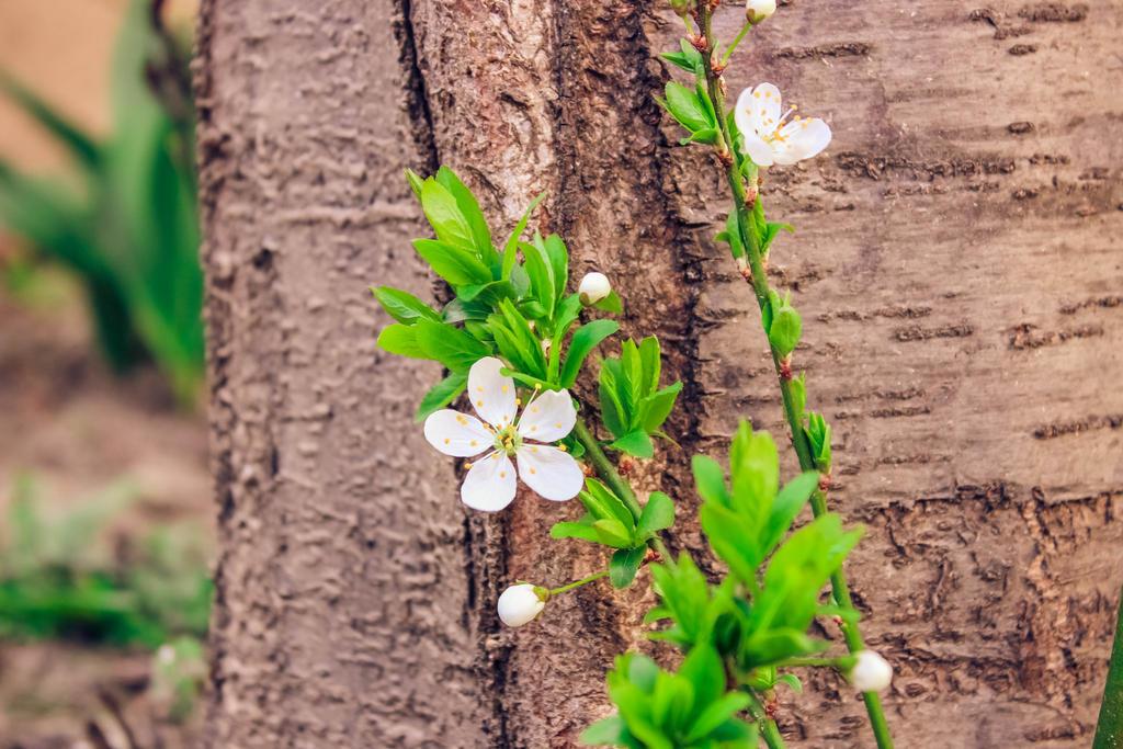 -spring.1-