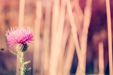 -love.nature.3-