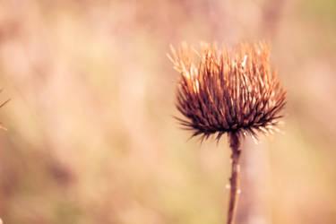 -love.nature.4-