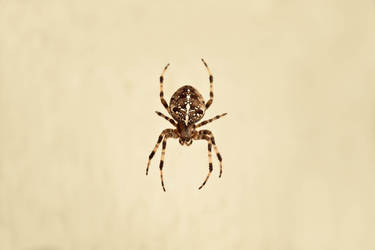 -love.spiders-