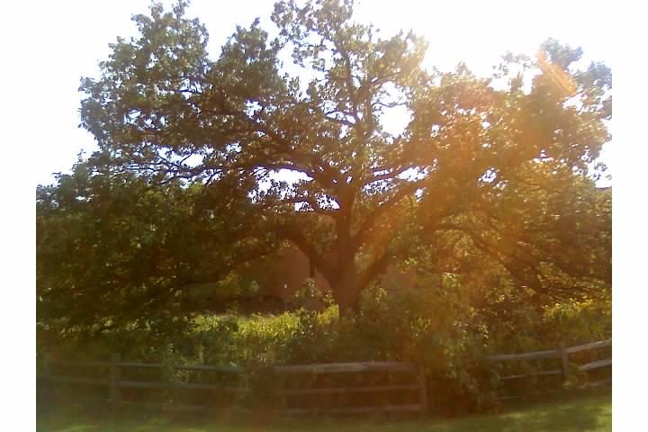 Solitary Oak by CrimsonNirvana