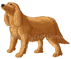 Cocker Spaniel by Th3Frgt10Warrior