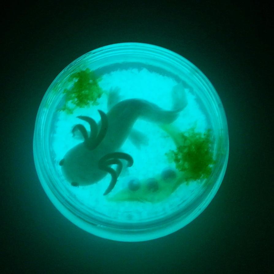 Axolotl glow in the dark