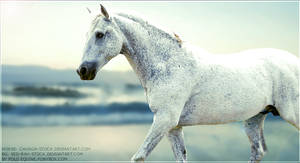 Horse Picture by poloart-pb