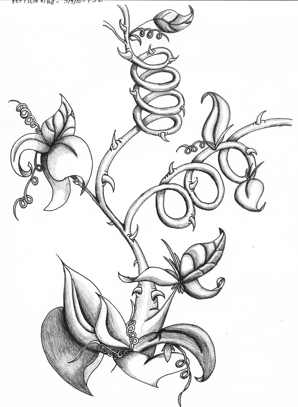 It is an image of Obsessed Rose Vine Drawing