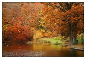 Autumn Scene by snader