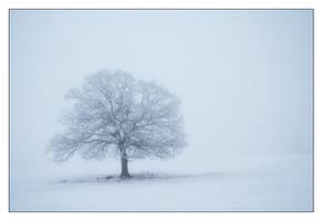 Tree by snader