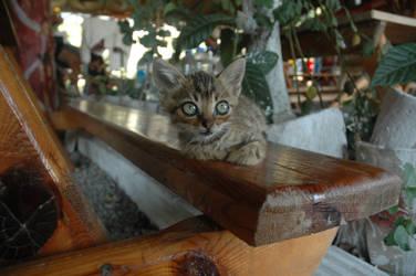 Kitty.. by DienekeSart