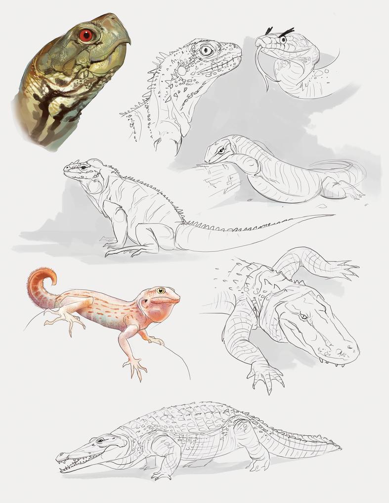 Reptile studies by miriamrez