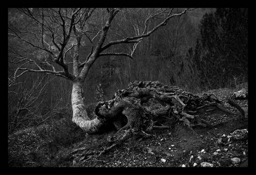 Untitled tree.