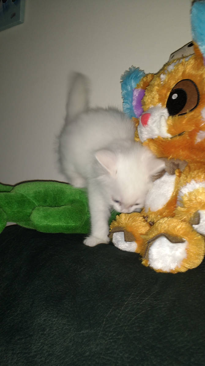 Gnar and Fredric