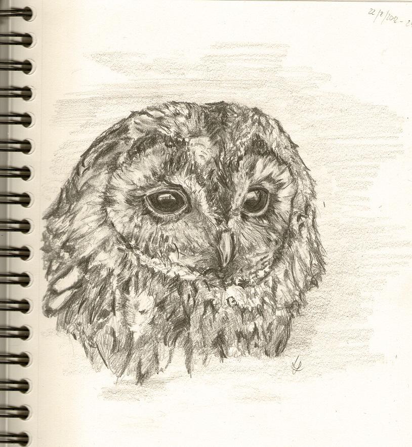 Tawny owl by Larstonka