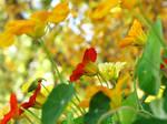 Autumnal Vibrance