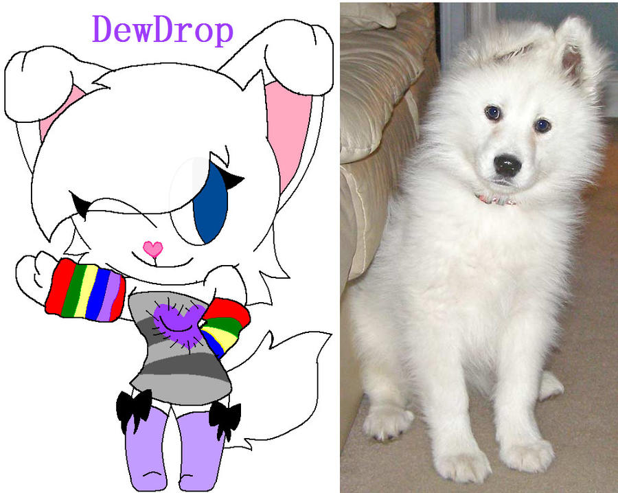 DewDrop The Samoyed by DewdropLightly