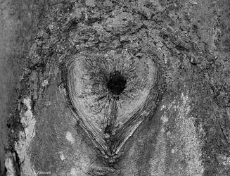 Heart of nature by asiaseen