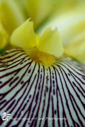 Purple and Yellow II by StMongo