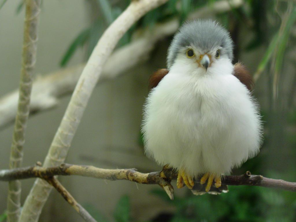 Im still a Falcon by Rathoren