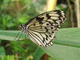 butterfly world '08 003 by virusoverload