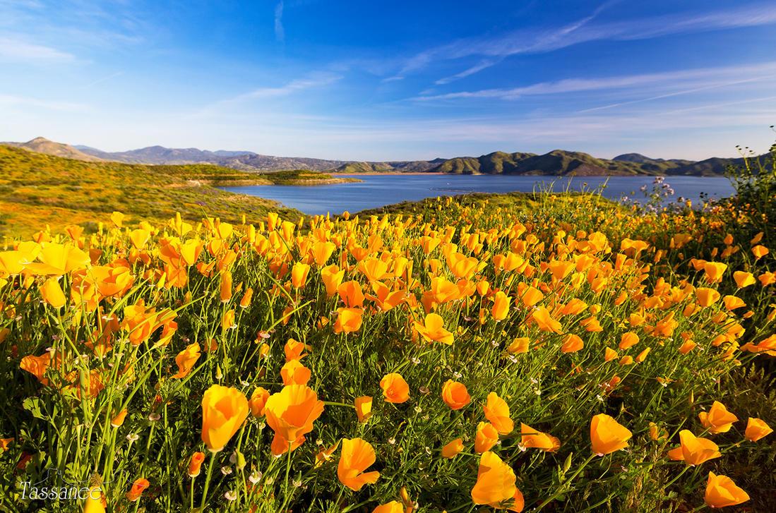 California Dreamin by tassanee