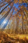 Autumn Giants
