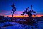 Winter Sunsets by tassanee