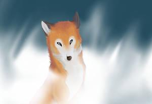 A fox in da mist