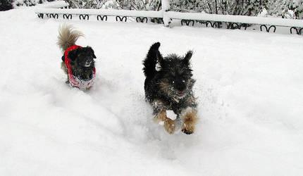 Nieve by Dunwich