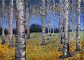 Birches by c0m0r