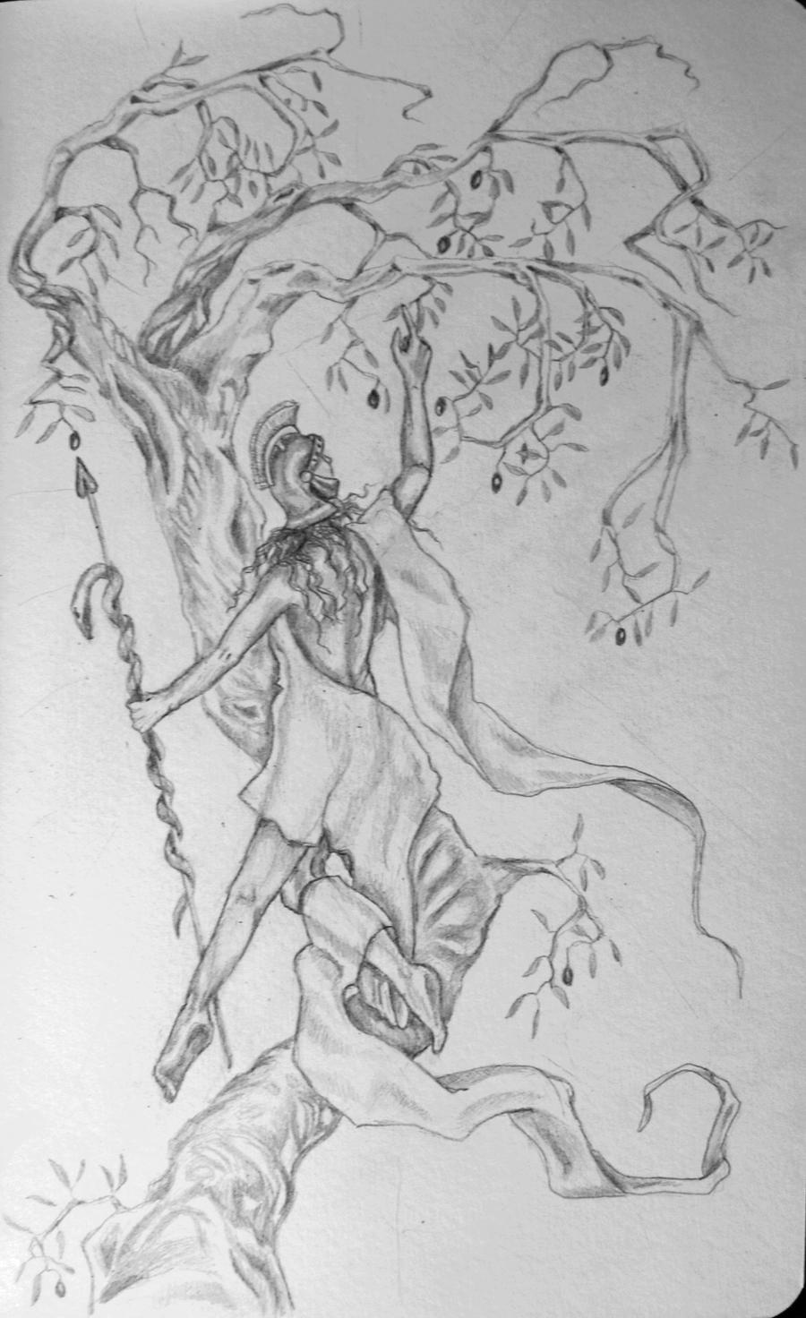 athena symbol olive tree and owl wwwimgkidcom the