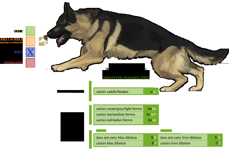 8 Different German Shepherd Coat Color Patterns  PetHelpful
