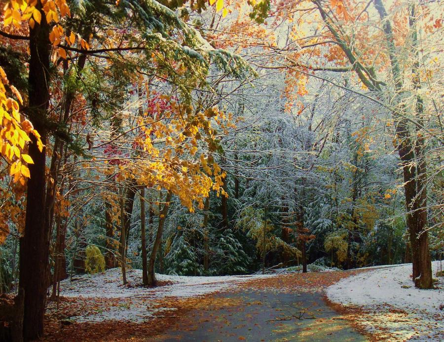 Autumn Winter by pxiestx99