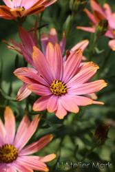 Flower - Mark Mikolai by LAtelierMark